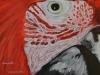Fotorealistische Malerei - Vögel Sophie Rundle 2014